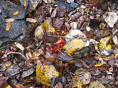 Rocks And Berries Print by Leone Lund