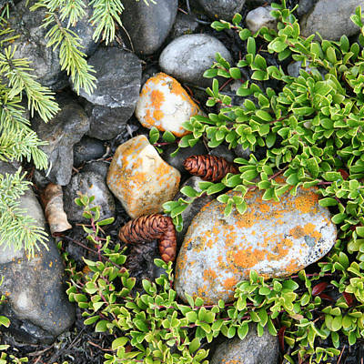 Photograph - Rocks And Lichen by Karen Lindquist
