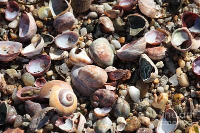 Photograph - Rocks And Shells by Carol Groenen