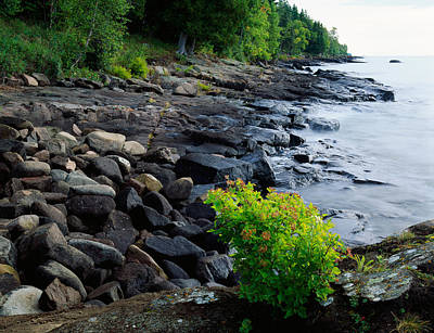 Park Scene Photograph - Rocks And Trees Along Lake Superior by Panoramic Images