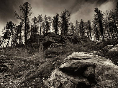 Photograph - Rocks And Trees And Trees And Rocks by Trever Miller