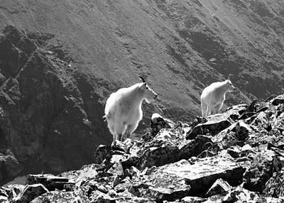 Photograph - Rocks Shade And White Mountain Goats by Nina Donner