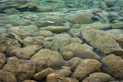 Photograph - Rocks Under Water by Stuart Litoff
