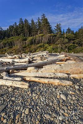 Rocky Beach And Driftwood Art Print