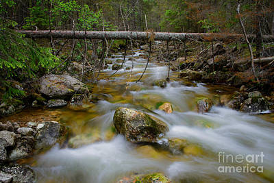 Photograph - Rocky Forest Creek With Motion Blurred Water by IPics Photography