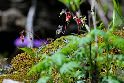 Photograph - Rocky Fork Spring 01 by Carol Kay