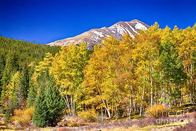 Rocky Mountain Autumn Bonanza Art Print by James BO  Insogna