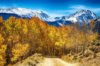 Forest Photograph - Rocky Mountain Autumn Cruisin by James BO  Insogna