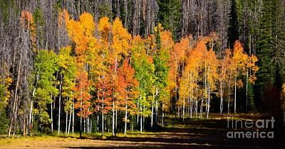 Photograph - Rocky Mountain Autumn High by Johanne Peale