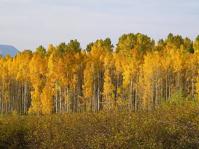 Impressionist Landscapes - Rocky Mountain Autumn by Tina Barnash
