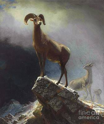 Fauna Painting - Rocky Mountain Big Horn Sheep by Pg Reproductions