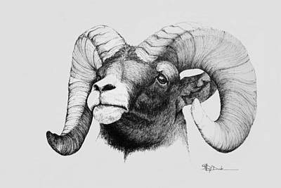 Drawing - Rocky Mountain Bighorn by Mary Dove