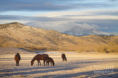 Photograph - Rocky Mountain Colorado Country Morning by James BO Insogna