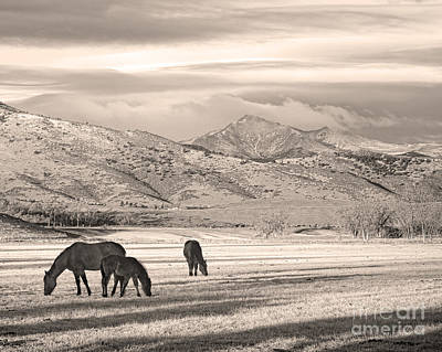 Photograph - Rocky Mountain Colorado Longs Peak  Country Morning Sepia by James BO Insogna