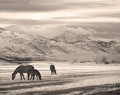 Photograph - Rocky Mountain Colorado Longs Peak  Country Morning Sepia by James BO  Insogna