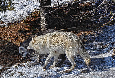 Photograph - Rocky Mountain Encounter by Skye Ryan-Evans