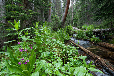Photograph - Rocky Mountain Forest Detail by Cascade Colors