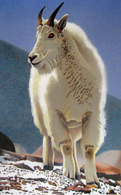 Mountain Goat Drawing - Rocky Mountain Goat by Dan Miller