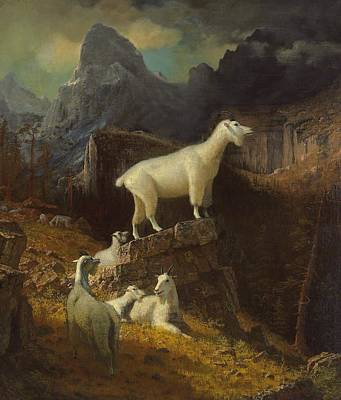 Mountain Goat Painting - Rocky Mountain Goats by Albert Bierstadt