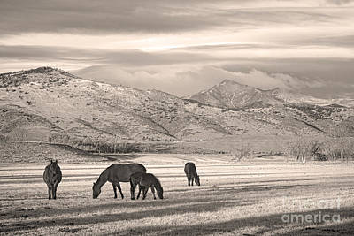 Photograph - Rocky Mountain Longs Peak Colorado Sepia Horse Morning by James BO Insogna