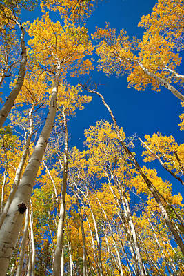 Photograph - Rocky Mountain National Park Aspen Trees by Posters of Colorado