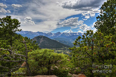 Photograph - Colorado Rocky Mountain Pines by D Wallace