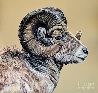 Pastel - Rocky Mountain Ram by Ann Marie Chaffin