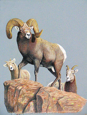 Rocky Mountain Ram Ewe And Lamb Art Print