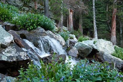 Photograph - Rocky Mountain Stream by Cascade Colors