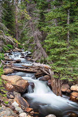 Forest Photograph - Rocky Mountain Stream by James BO  Insogna