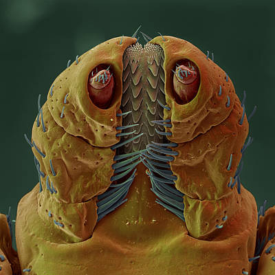 Rocky Mountain Wood Tick Art Print by Eye of Science