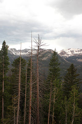 Photograph - Rocky Mountains 3 by Mary Bedy