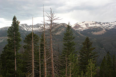 Photograph - Rocky Mountains by Mary Bedy