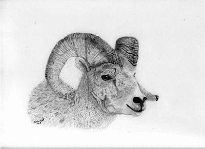 Ram Sheep Drawing - Rocky Mt Bighorn by Wendy Brunell