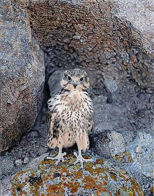 Painting - Rocky by Terry Bungard
