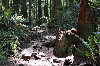 Photograph - Rocky Trail by Kirt Tisdale