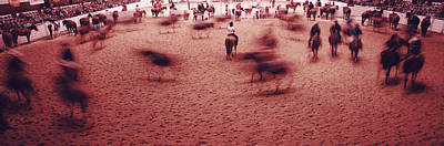 Working Cowboy Photograph - Rodeo Arena, Fort Worth Stock Show by Panoramic Images