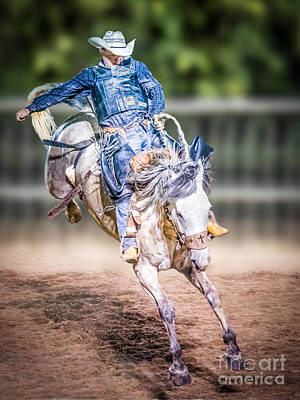 Photograph - Rodeo Bronc Rider by Char Doonan