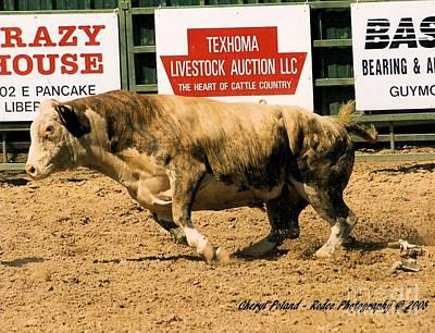 Photograph - Rodeo Bulls In Flight by Cheryl Poland