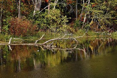 Rogue River Reflections Art Print