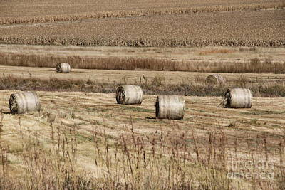 Photograph - Roll On The Hay by Taschja Hattingh