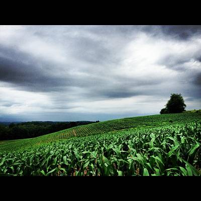 Photograph - Rolling Corn Field After Storm by Angela Rath