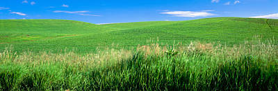 Whitman Photograph - Rolling Green Hill, Palouse, Whitman by Panoramic Images
