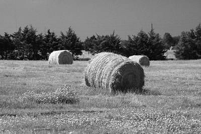 Photograph - Rolling In The Hay Bw by Robyn Stacey