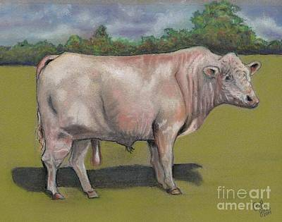 Pastel - Rolling R Big Man Charolais Bull by Chris Bajon Jones