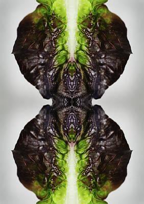Leaf Photograph - Romaine Lettuce by Silvia Otte