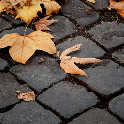 Photograph - Roman Path - Leaves On Stones by Michael Flood