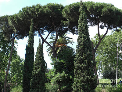 Photograph - Roman Trees by Deborah Smolinske
