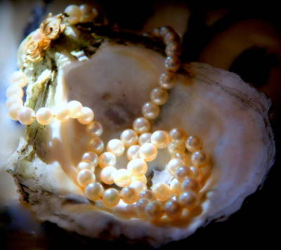 Oyster Photograph - Romance Of The Sea by Karen Wiles
