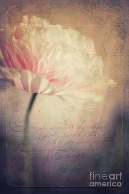 Pink Poppy Blossom Macro Photograph - Romance by Priska Wettstein